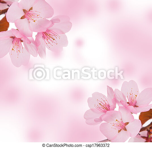 primavera, conceito - csp17963372
