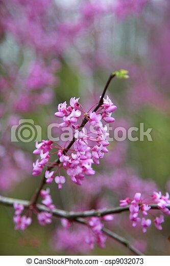 primavera, fiore - csp9032073
