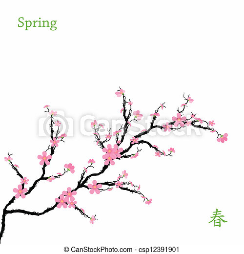 primavera, fiori, ciliegia - csp12391901