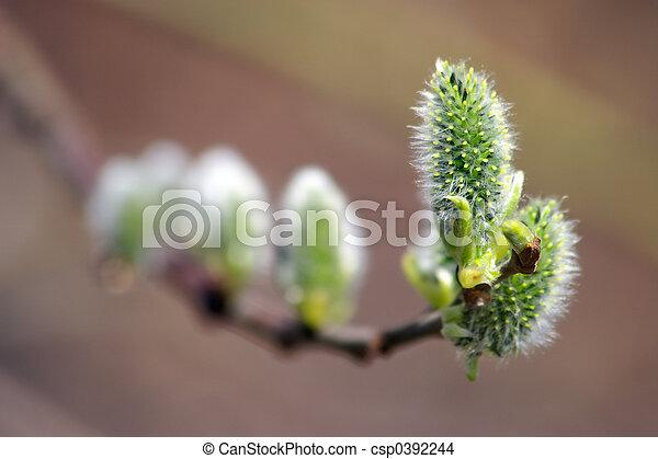 primavera, fioritura - csp0392244