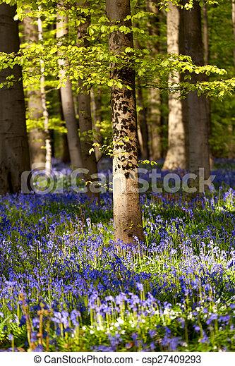 Flores de campanillas en el bosque de primavera - csp27409293