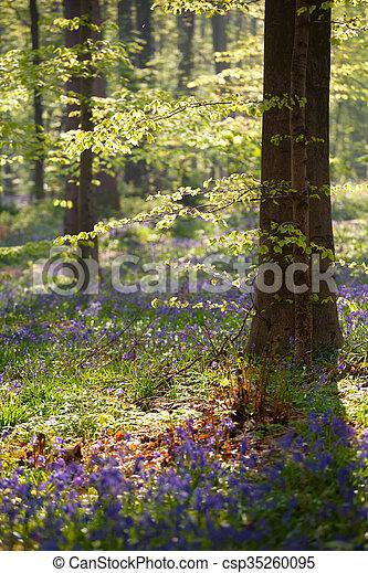 Sol de la mañana en el bosque de flores de primavera - csp35260095