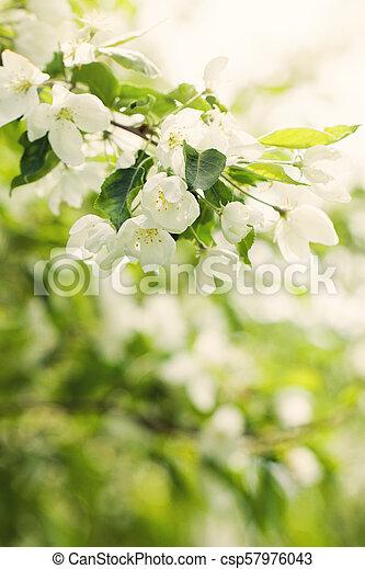 Primavera Foglie Fiori Bokeh Sfondo Verde Luce Astratto