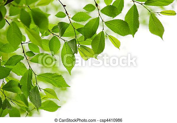 primavera, foglie, verde bianco, fondo - csp4410986