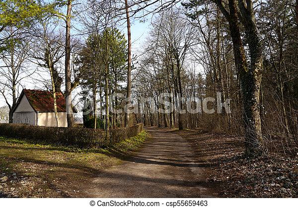 primavera, foresta - csp55659463