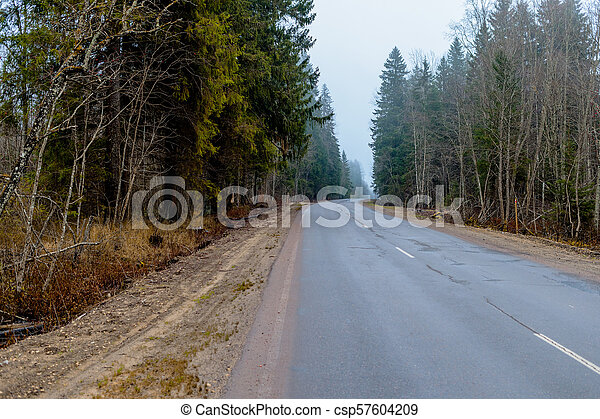 primavera, foresta, automobile, strada, foto - csp57604209