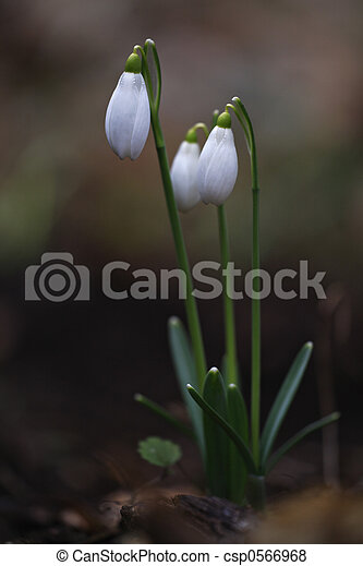 primavera - csp0566968