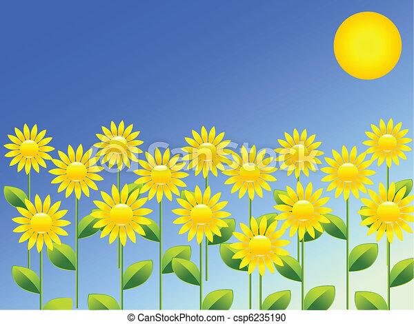 primavera, girassóis, fundo - csp6235190