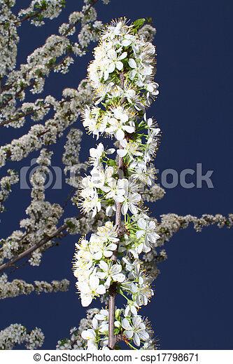 primavera - csp17798671