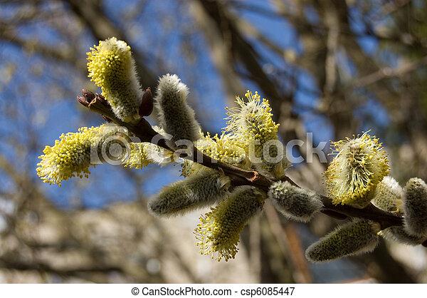 primavera - csp6085447