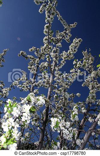 primavera - csp17798780