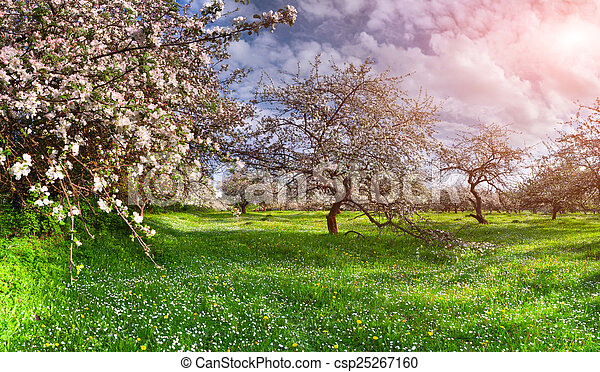 Lovely Primavera, Paisaje, Jardín, Colorido, Manzanas   Csp25267160