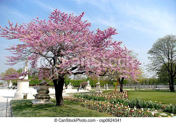 Primavera en París, jardín de louvre - csp0624341