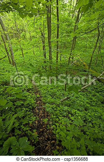 primavera, rastro, whiteoak, pia - csp1356688