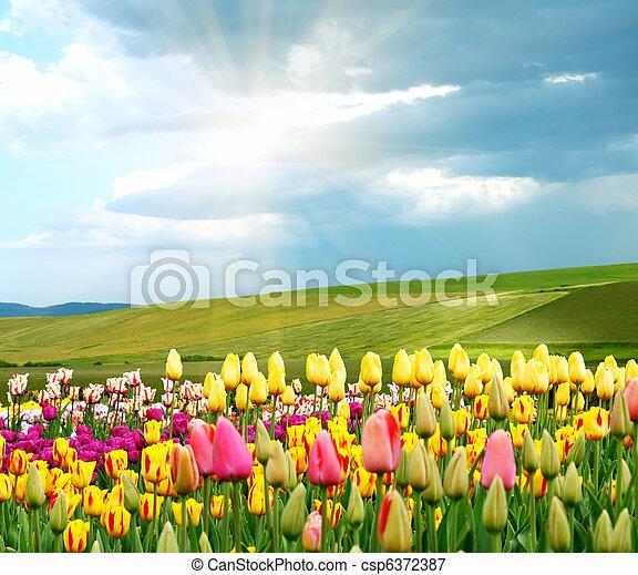 primavera - csp6372387