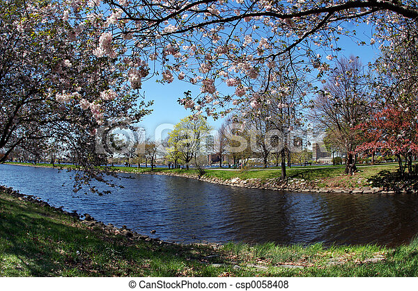 primavera - csp0058408
