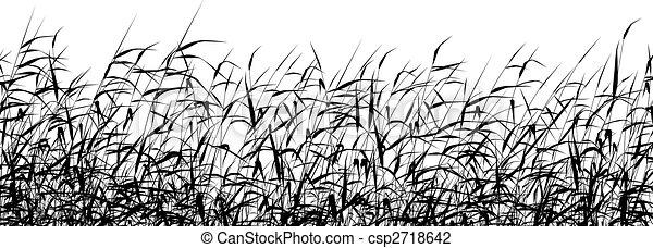 Reed en primer plano - csp2718642