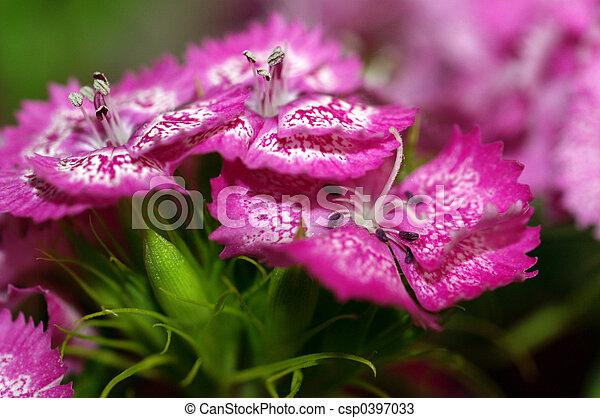primer plano, flores - csp0397033