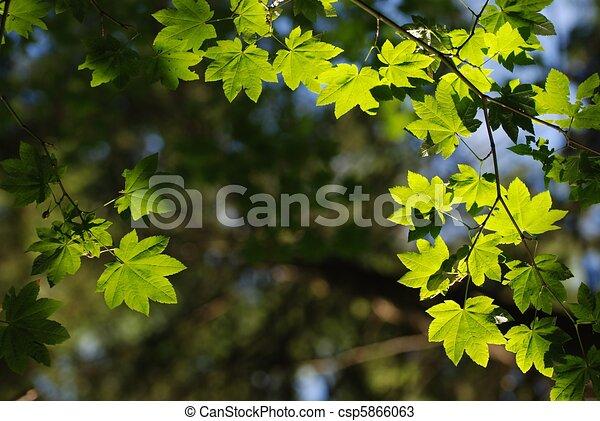 Hoja de la naturaleza - csp5866063