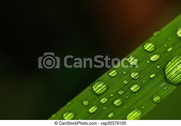 Un primer plano de gotas de agua en una hoja - csp30379105