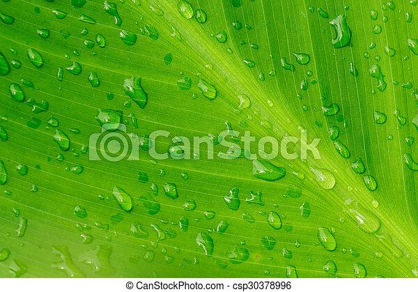 Un primer plano de gotas de agua en una hoja - csp30378996