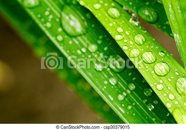 Un primer plano de gotas de agua en una hoja - csp30379015