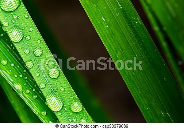Un primer plano de gotas de agua en una hoja - csp30379089