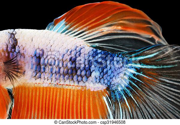 Un primer plano de la piel de un pez siamés - csp31946508