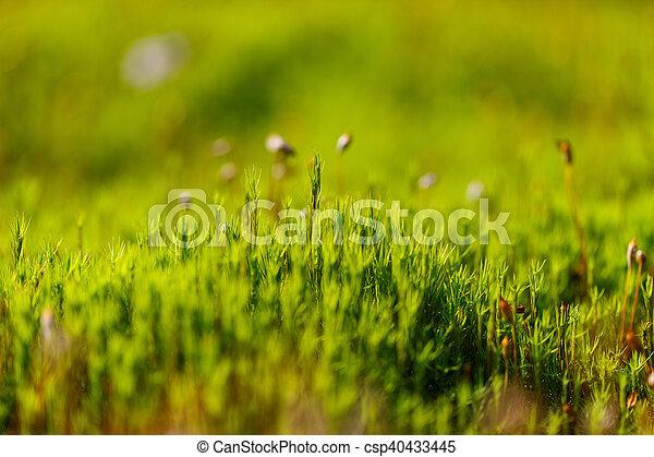 Armario de esfágnum verde en el pantano. - csp40433445