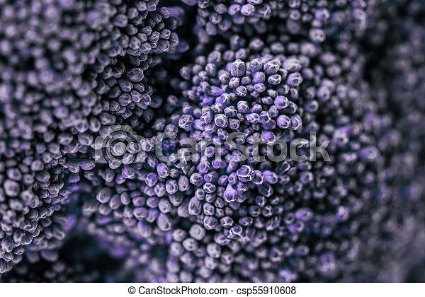 Un primer plano de floretes de col de brócoli violeta - csp55910608