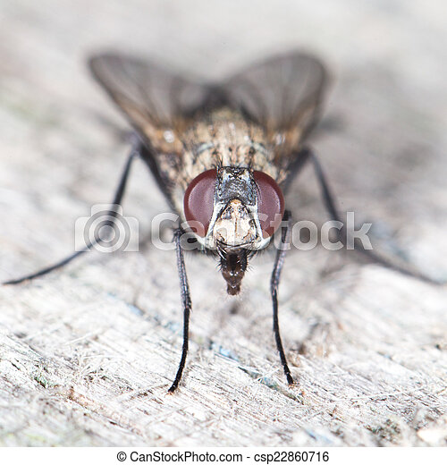 primo piano, fly. - csp22860716