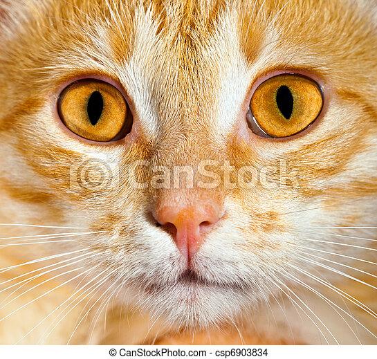 primo piano, gatto - csp6903834