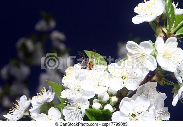 printemps, abeille - csp17799083