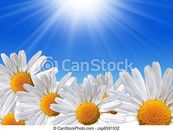 printemps, beauté - csp6591532