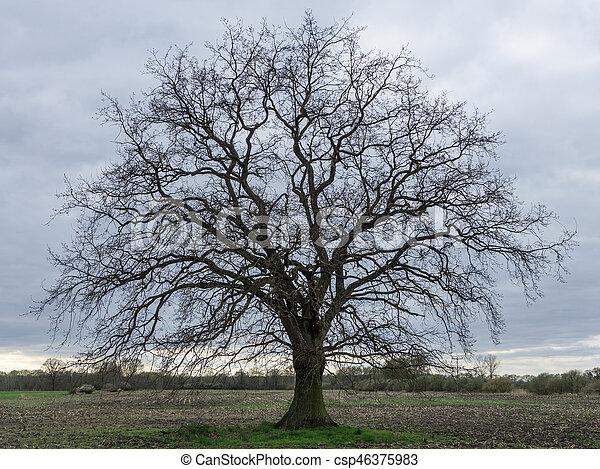 printemps feuilles arbre chne champ sans csp46375983 - Arbre Sans Feuille