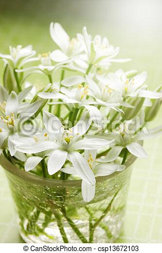 printemps, fleurs blanches - csp13672103