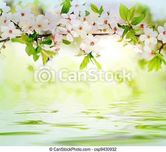 printemps, fleurs blanches, branche arbre - csp9430932