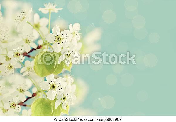 printemps, fleurs - csp5903907