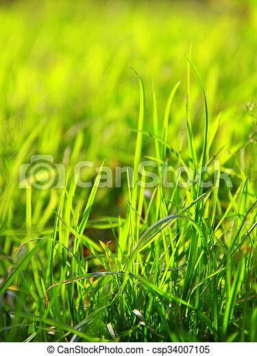 printemps, fond - csp34007105