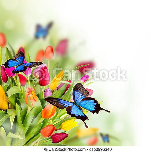 printemps, fond - csp8996340