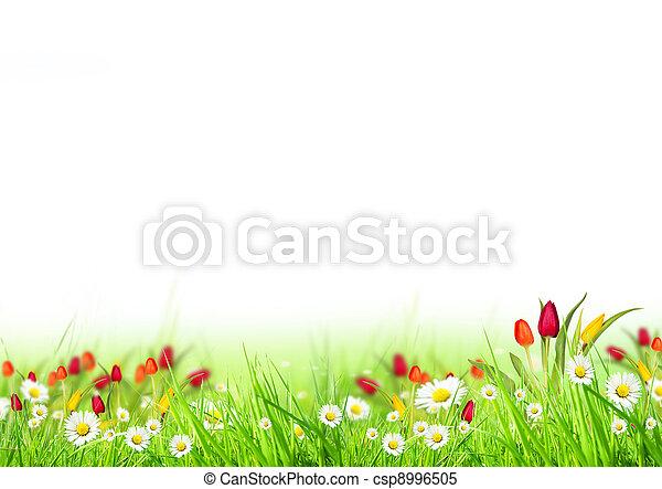 printemps, fond - csp8996505