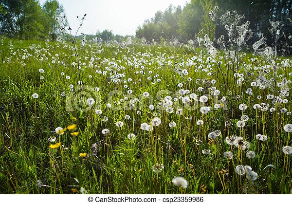 printemps, fond - csp23359986