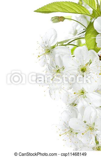 printemps, frontière, fleurs - csp11468149