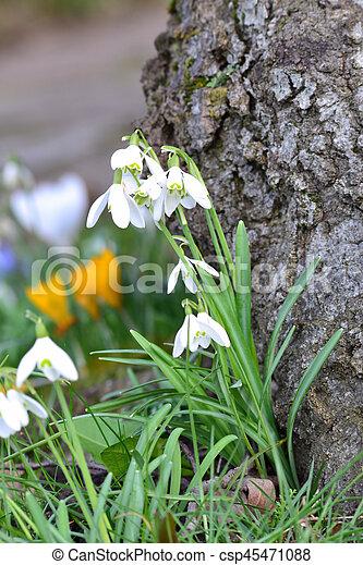 printemps, gouttes, -, temps neige - csp45471088