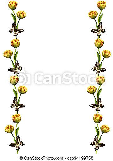 printemps, isolé, fond, tulipes, fleurs blanches - csp34199758