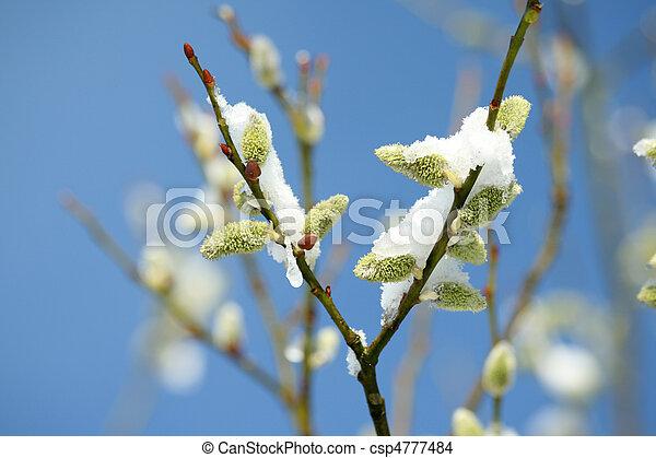 printemps, neige - csp4777484