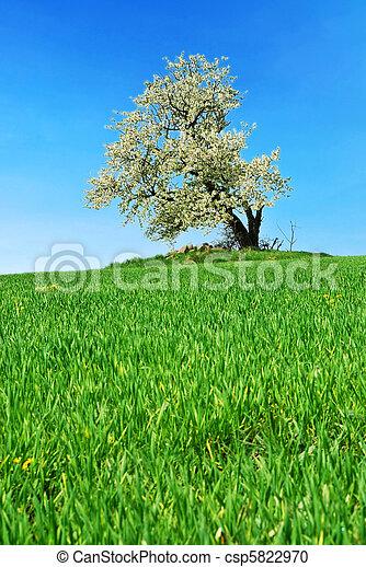 printemps, paysage - csp5822970