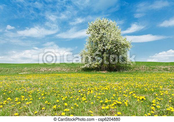 printemps, paysage - csp6204880