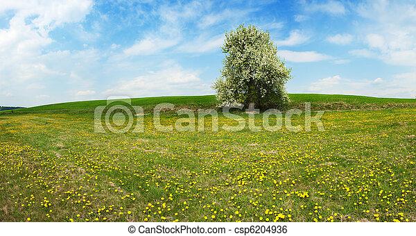 printemps, paysage - csp6204936
