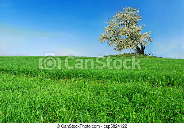 printemps, paysage - csp5824122